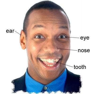 单词:ear的图片解释