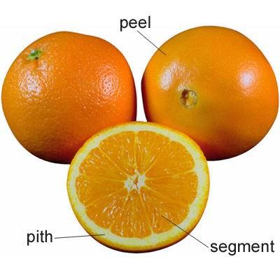 单词:pith的图片解释