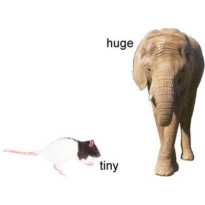 单词:tiny的图片解释